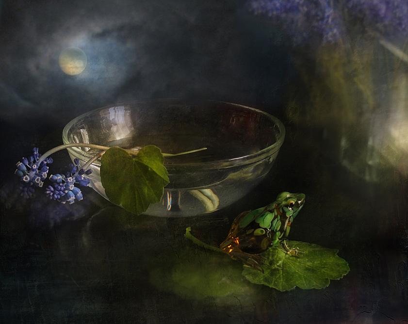 "фото ""Водоем"" метки: натюрморт, лягушка, цветы"