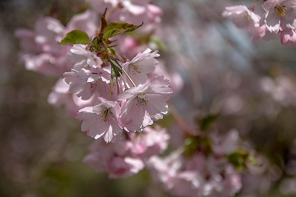 "фото ""А я говорю., весна говорю....."" метки: ,"