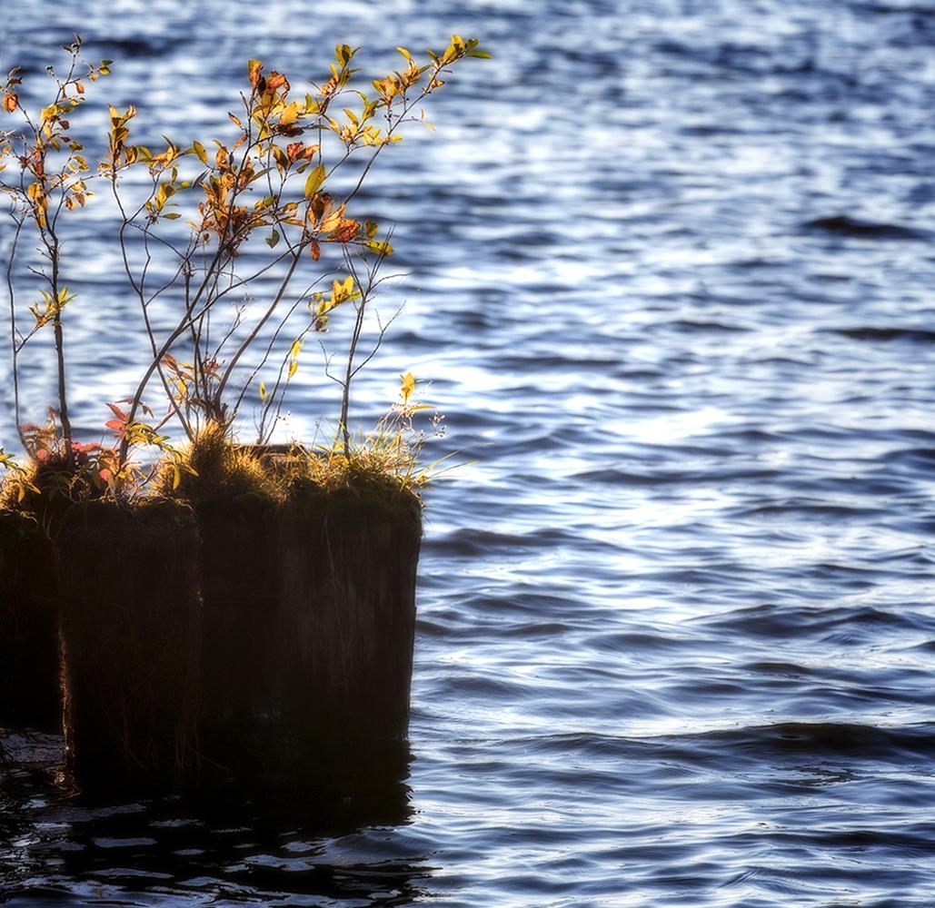 "photo ""***"" tags: landscape, nature, autumn, water"