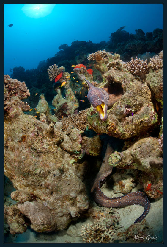 """фото """"Бросок"""" метки: подводные,"""