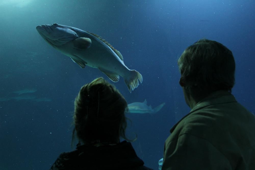 """photo """"The fish"""" tags: , Alicante"""