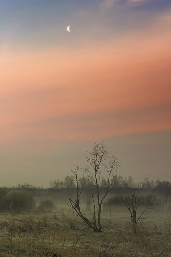 "photo ""***"" tags: still life, landscape, fog, spring, sunrise"