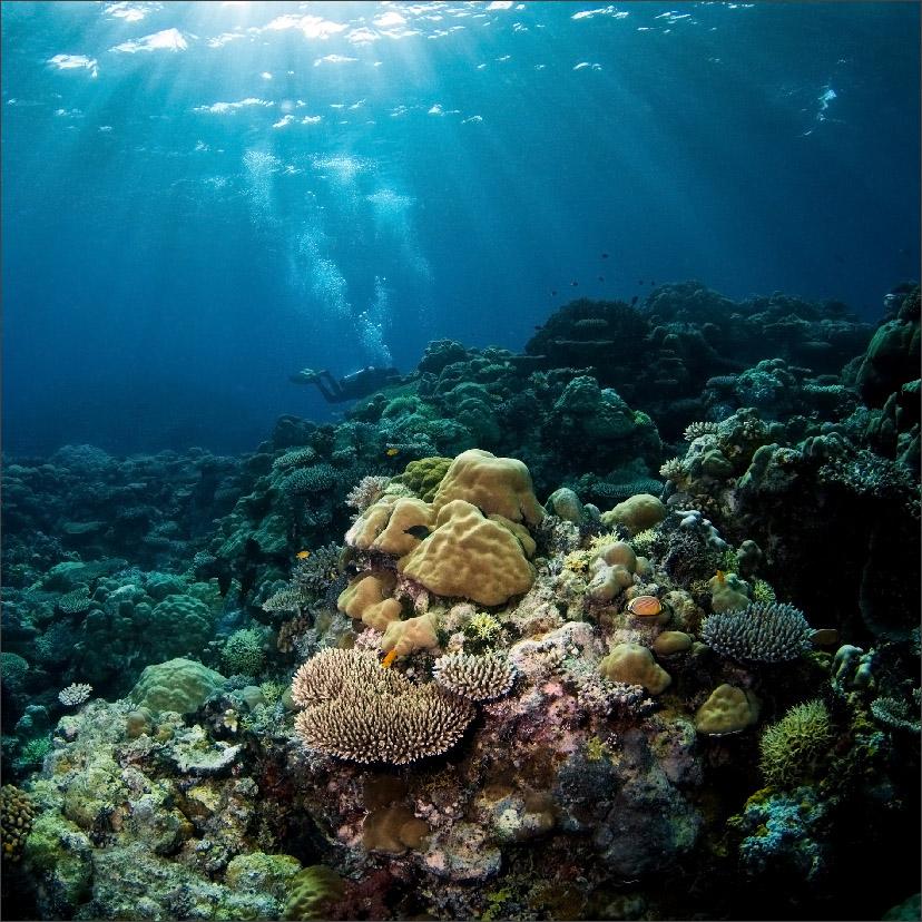 """фото """"***"""" метки: подводные, природа, Азия"""