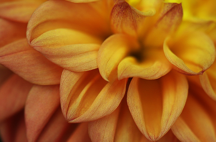 "photo ""Secrets Beauty"" tags: macro and close-up,"