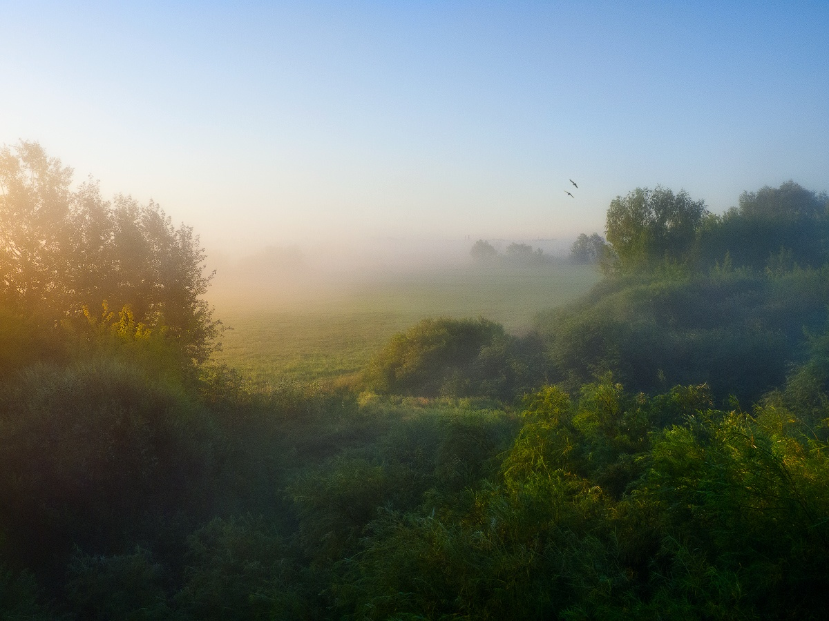 "photo ""About melting fog ..."" tags: landscape, coast, fog, meadow, morning"