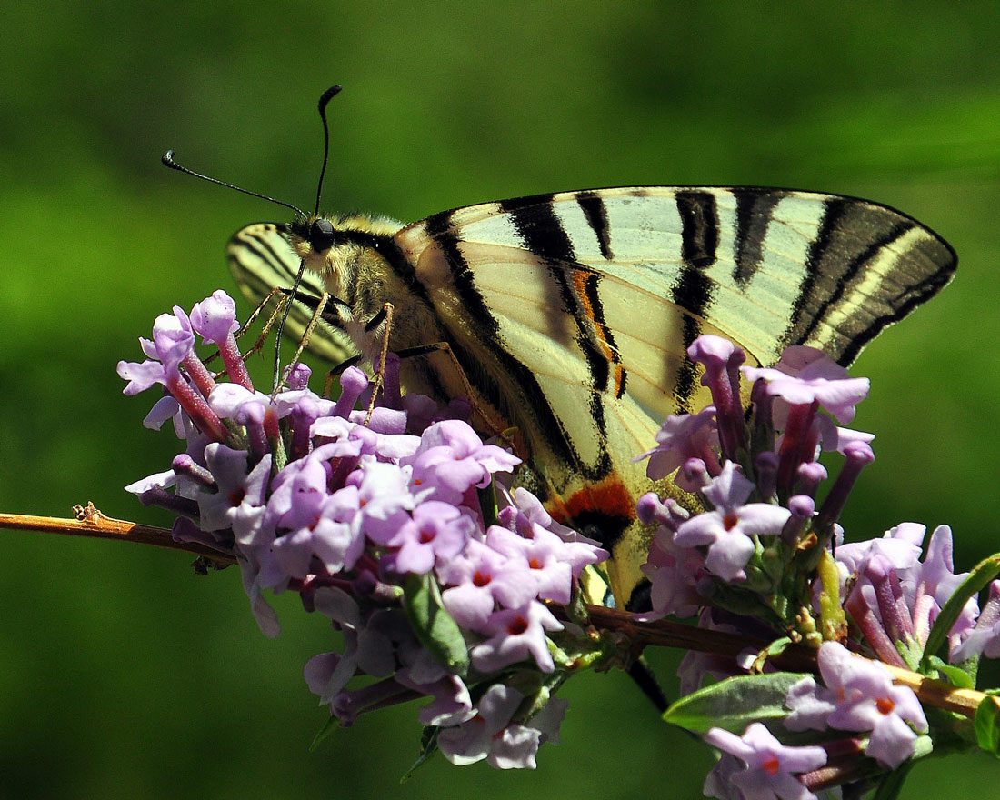 "photo ""***"" tags: nature, macro and close-up, butterfly"