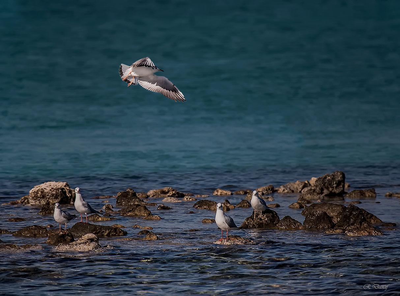 "photo ""Landing 2"" tags: nature, bird, sea"