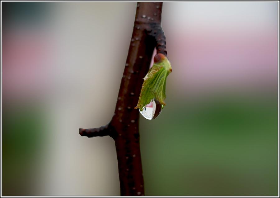 "фото ""Весенняя"" метки: природа, весна, вода"