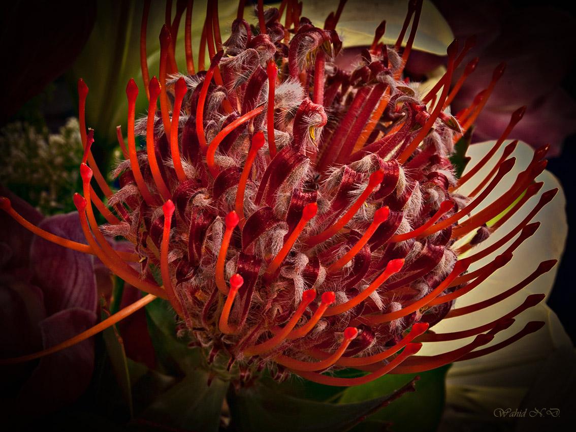 "photo ""Floral macro"" tags: nature, macro and close-up, Flora"