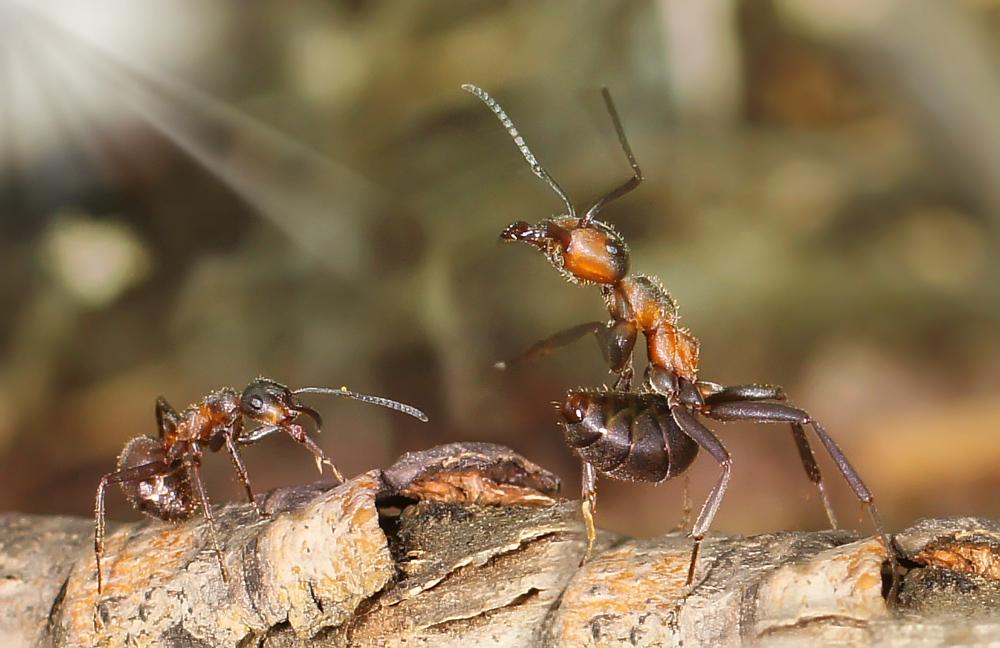 Фото муравья крупным планом, анечка учится мастурбировать