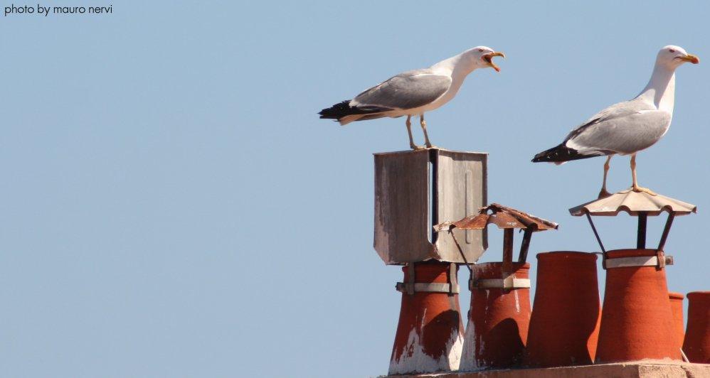 "photo ""seagulls"" tags: nature,"