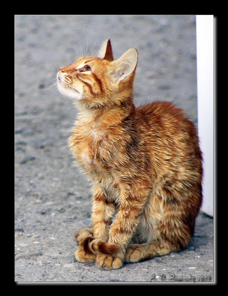 """фото """"Молитва кошачьим богам"""" метки: природа, разное, жанр, дикие животные, домашние животные"""