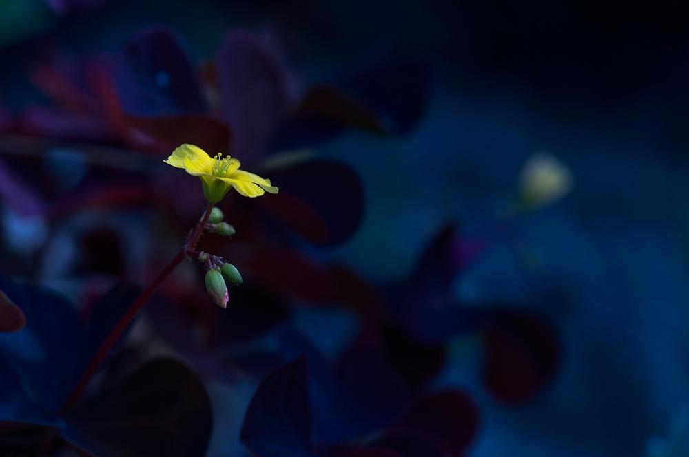 """фото """"Как бы один?"""" метки: макро и крупный план, природа, лес, лето, цветы"""