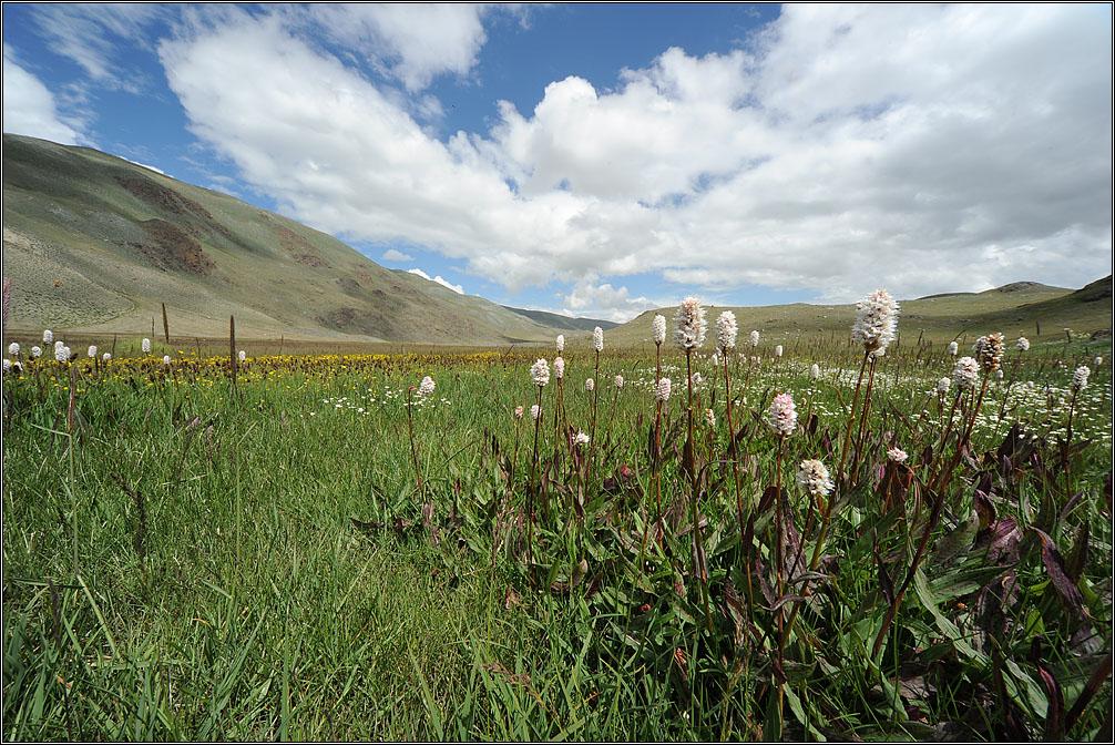 "photo ""Altai Mountains. Grass."" tags: landscape, travel, nature, Алтай"