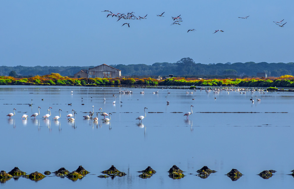 "photo ""Estuary"" tags: panoramic, landscape, nature, Europe, Tagus, animals, beauty, birds, estuary, portugal, river, wild animals"