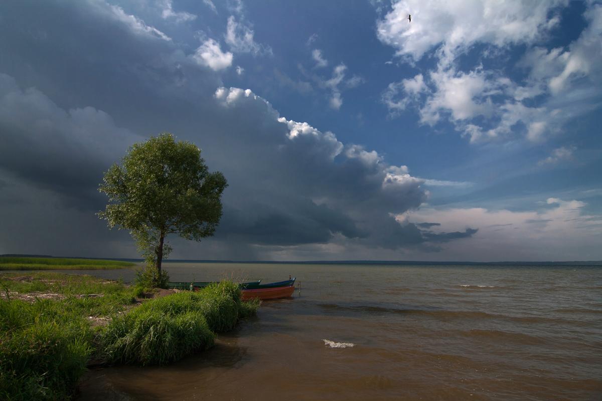 """photo """"***"""" tags: landscape, одинокое дерево"""