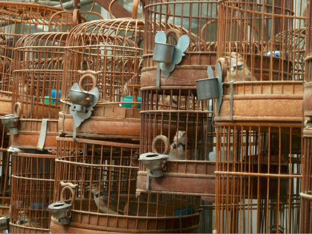"фото ""Ария на птичьем рынке"" метки: репортаж, путешествия, Азия, птицы"