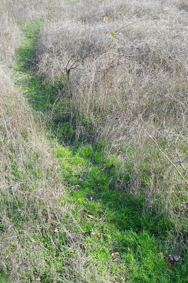 """фото """"Пътека"""" метки: пейзаж, природа,"""