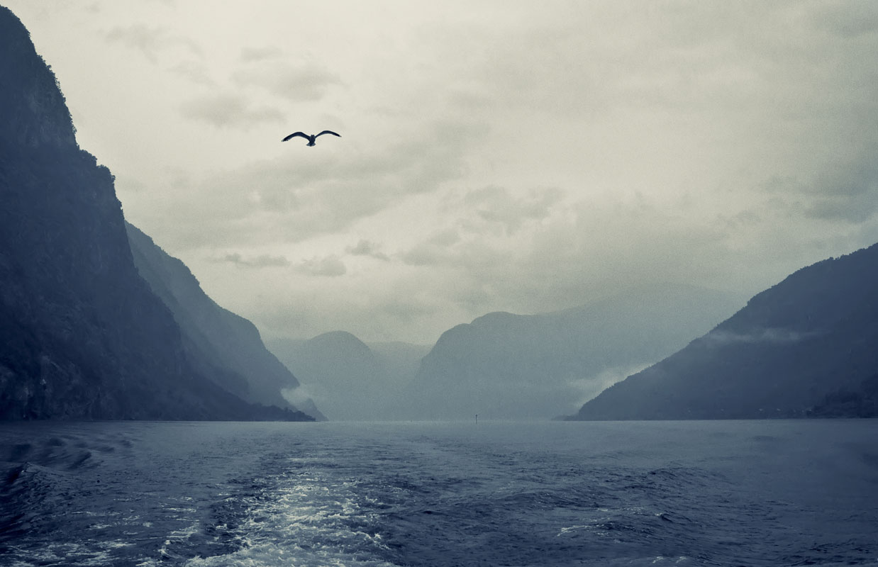"""photo """"***"""" tags: landscape, travel, nature, Norway, fog, mountains, согнефьорд, фьорд, чайка"""