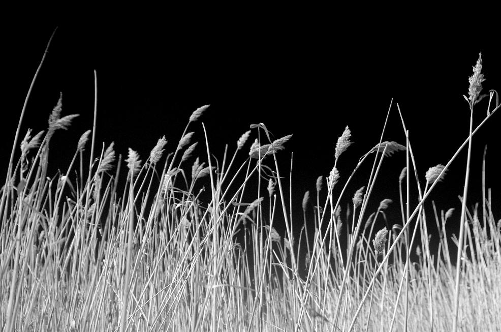 "photo ""***"" tags: nature, black&white,"