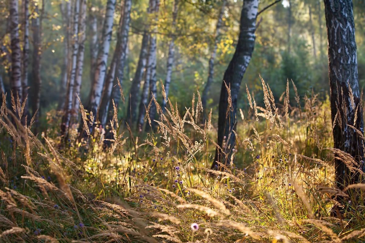 """фото """"*"""" метки: пейзаж, природа, лес, солнце, утро"""