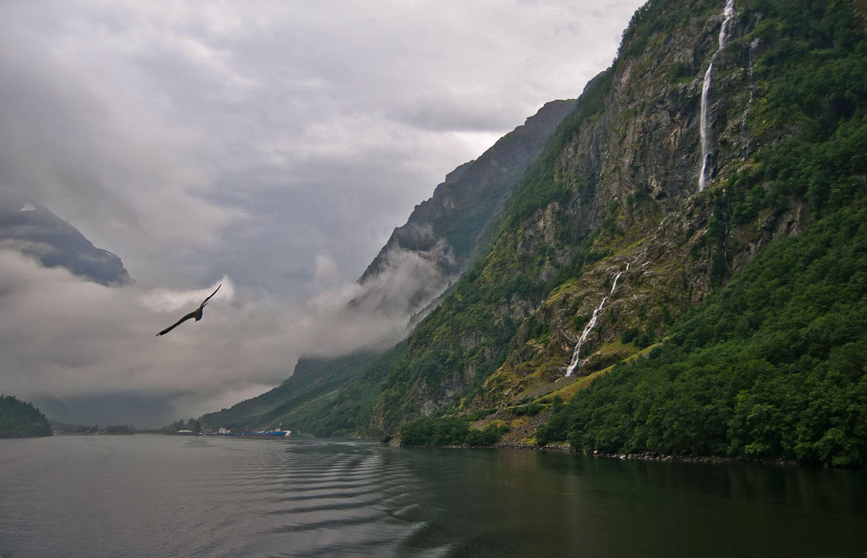 "photo ""***"" tags: landscape, travel, nature, Norway, fog, mountains, rain, фоьрд, чайки"