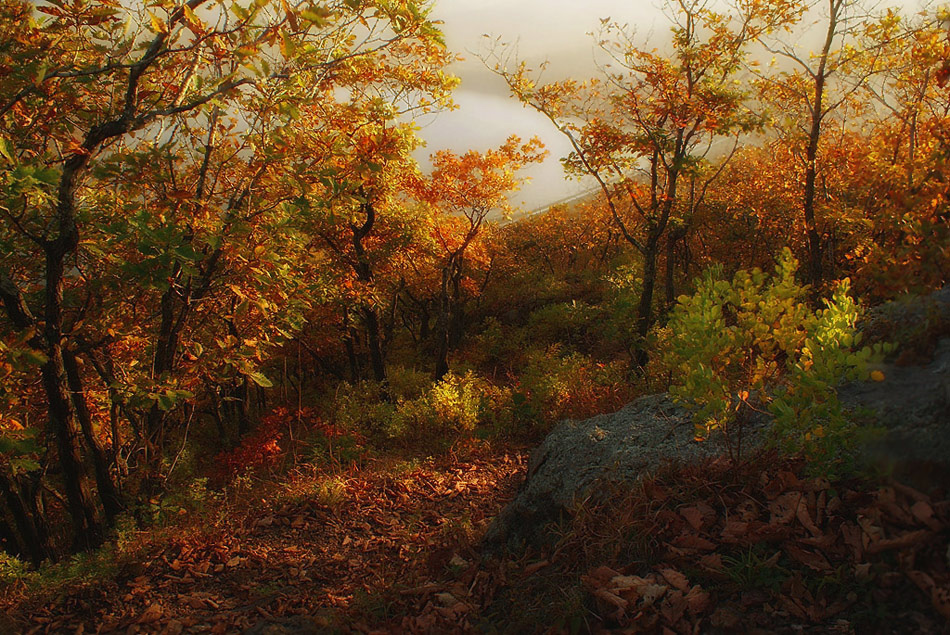 "photo ""***"" tags: landscape, autumn, Владивосток, Дальний Восток, Приморье"
