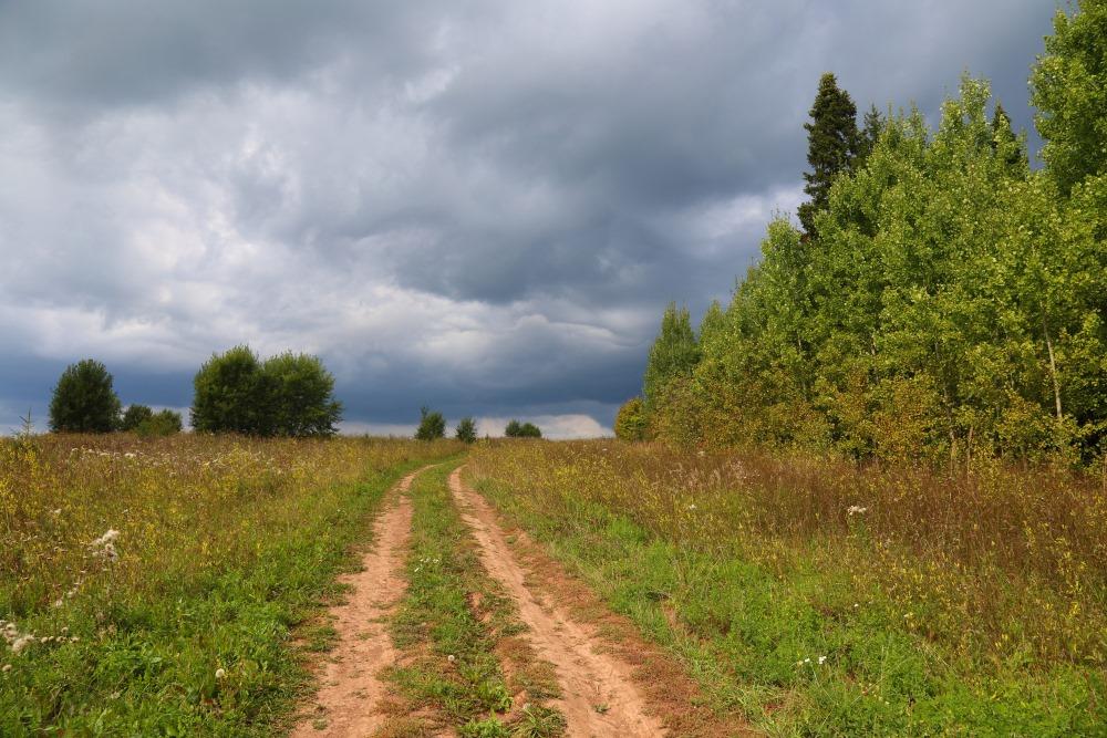 """фото """"Перед грозой"""" метки: природа, Россия, лес"""