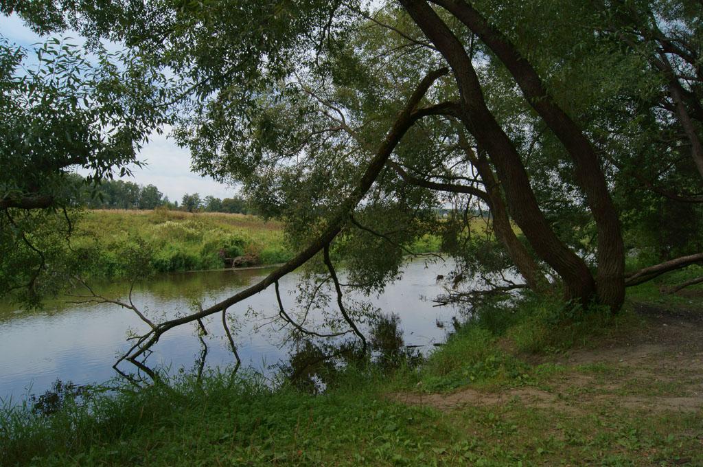 """фото """"У реки."""" метки: пейзаж, природа,"""