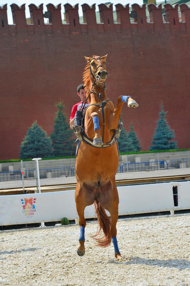 """фото """"На одной ноге"""" метки: репортаж, красная площадь, лошадь"""