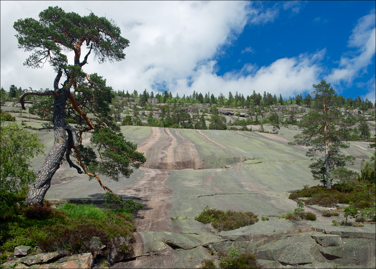 "photo ""Granite slope"" tags: landscape, travel, гора, гранит, склон, сосна"