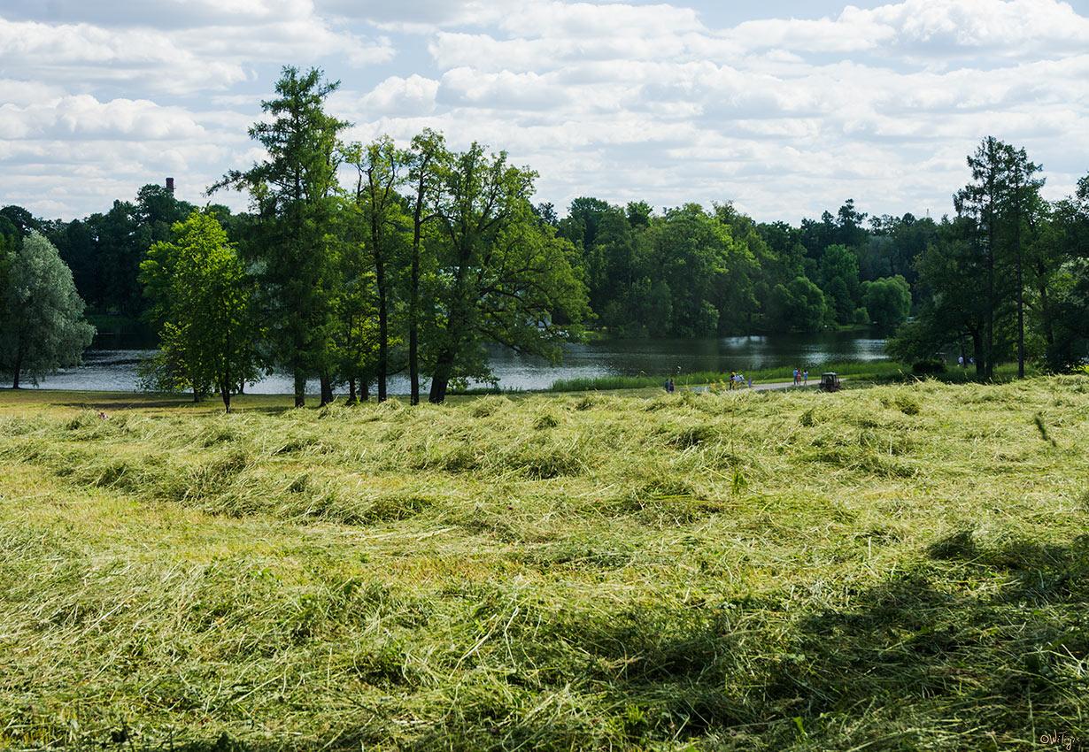 """фото """"Сенокос"""" метки: пейзаж, вода, лето, облака, озеро"""