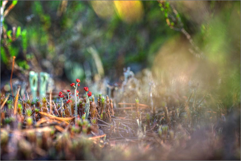 """photo """"***"""" tags: nature, macro and close-up, abstract,"""