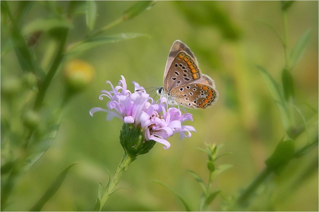 """фото """"Бабочкина осень.."""" метки: макро и крупный план, природа,"""