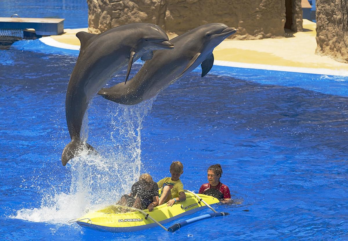 "photo ""***"" tags: reporting, travel, children, Гран-Канария, дельфины"