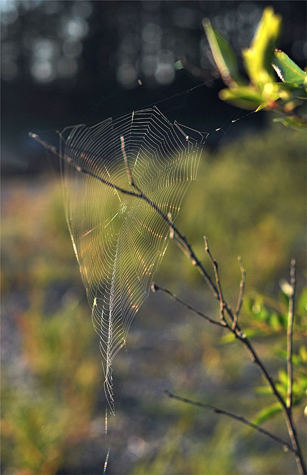"""фото """"Необычная..."""" метки: путешествия, природа,"""