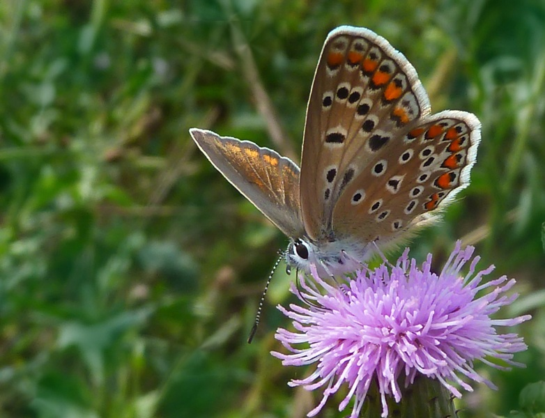 """photo """"***"""" tags: nature, macro and close-up, Ukraine, insect"""