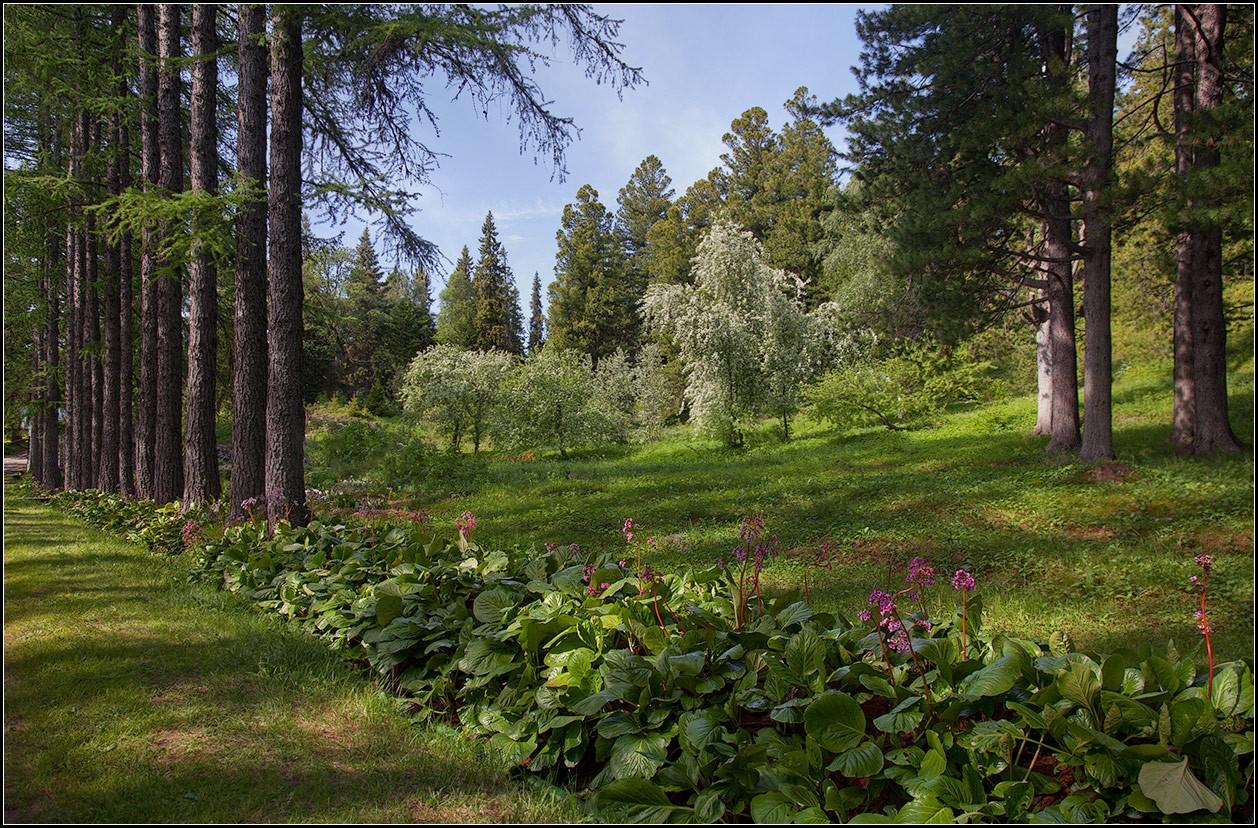 "photo ""Solovki"" tags: landscape, nature,"