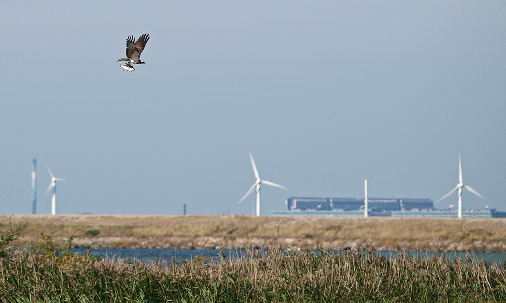 "photo ""Copenhagen Wildlife"" tags: nature, landscape, reporting,"