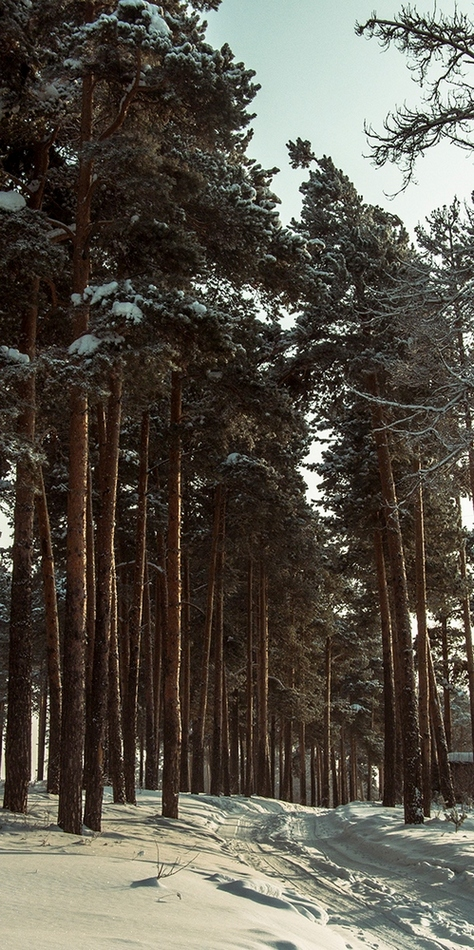 "фото ""Нижний Тагил"" метки: пейзаж, природа, город, Нижний Тагил, зима, лес, облака"