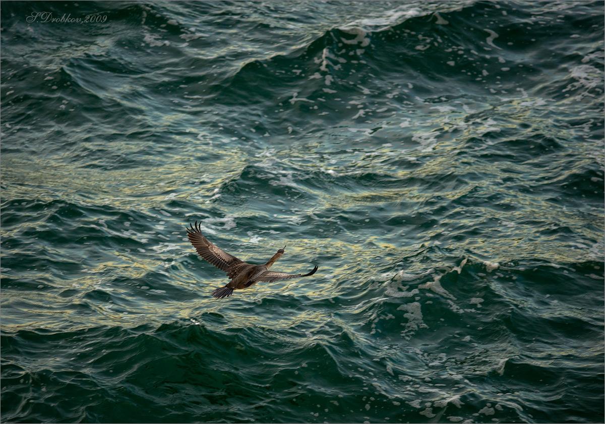 """фото """"Парящий над волнами"""" метки: природа, вода, дикие животные, закат, море"""