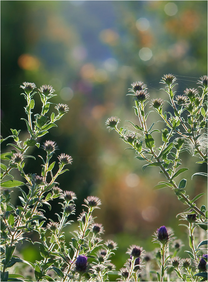 "фото ""Взявшись за руки, цветочки ""шагнули"" в осень..."" метки: природа, фрагмент,"
