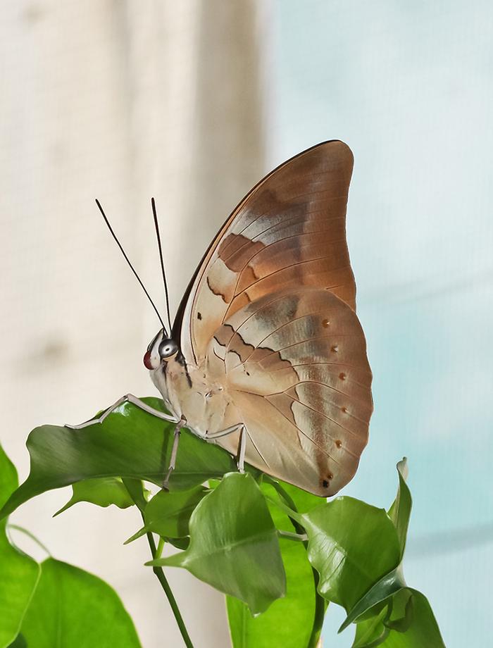 """фото """"Бабочки летают, бабочки ..."""" метки: макро и крупный план,"""