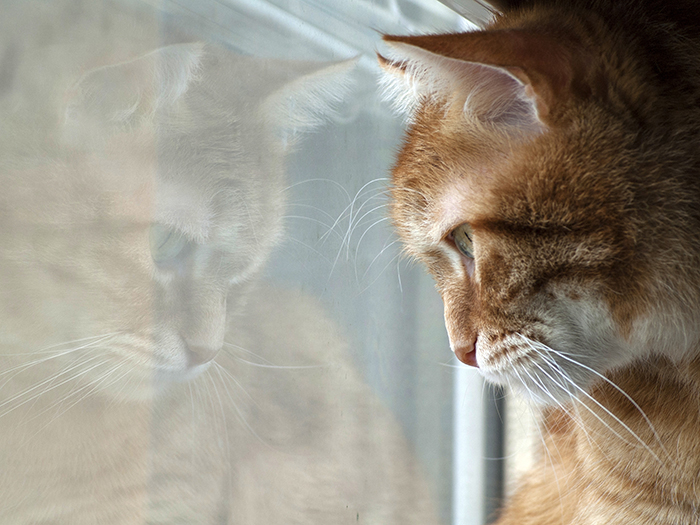 """photo """"Point of view"""" tags: nature, animal cat pets pussicat beaut"""