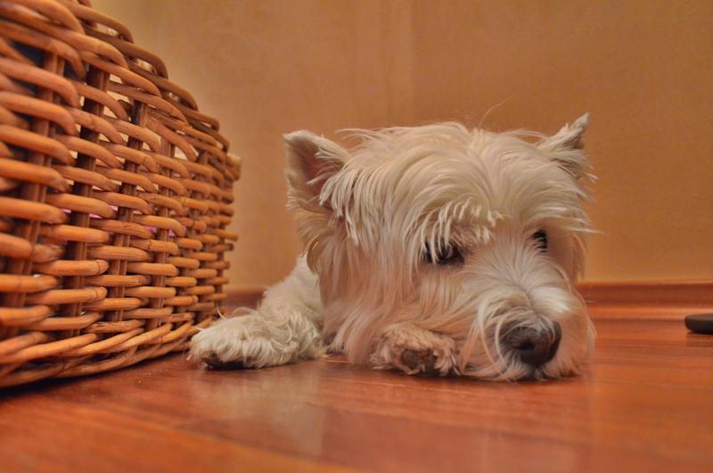 """фото """"Притомился"""" метки: разное, домашние животные, собаки"""