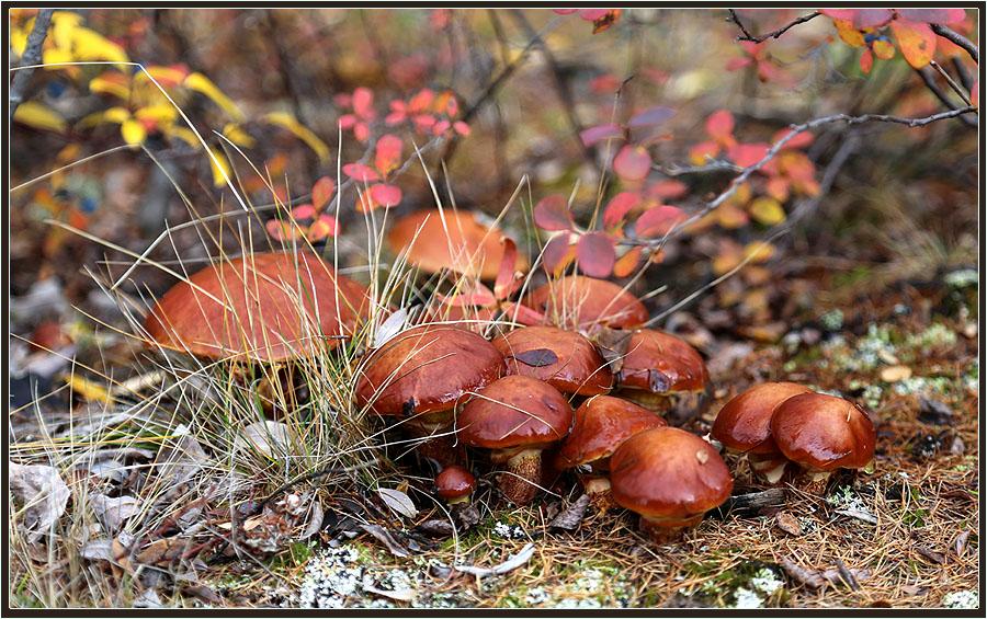 """фото """"Маслята"""" метки: природа, маслята"""