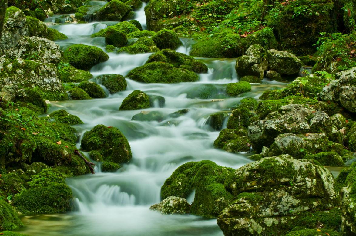 "фото ""Na Triglav"" метки: пейзаж, forest, вода, горы"