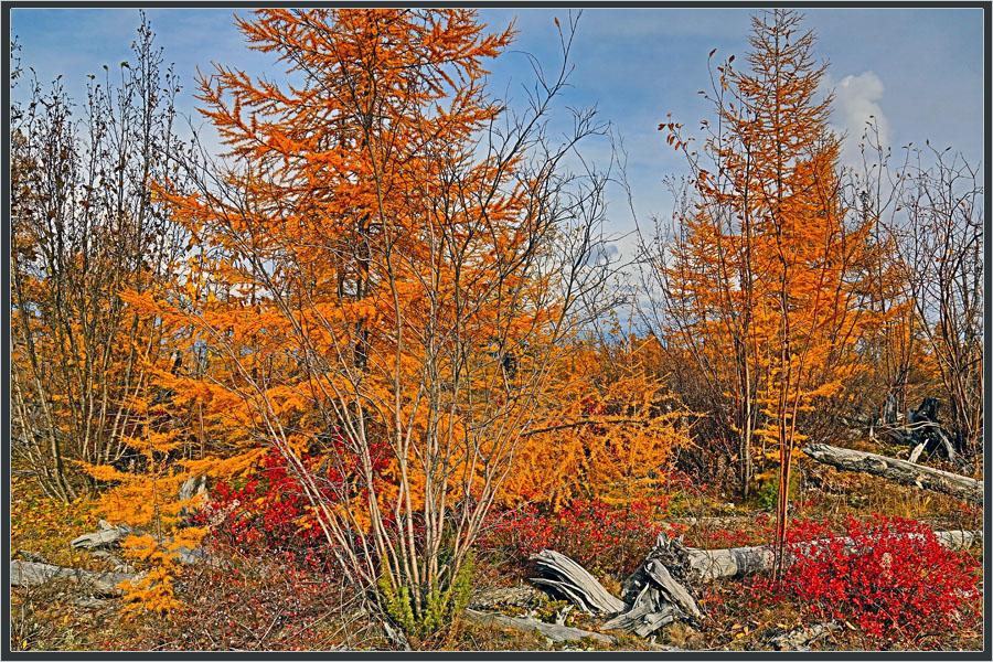 """фото """"Краски осени"""" метки: природа, краски, осень, тайга"""