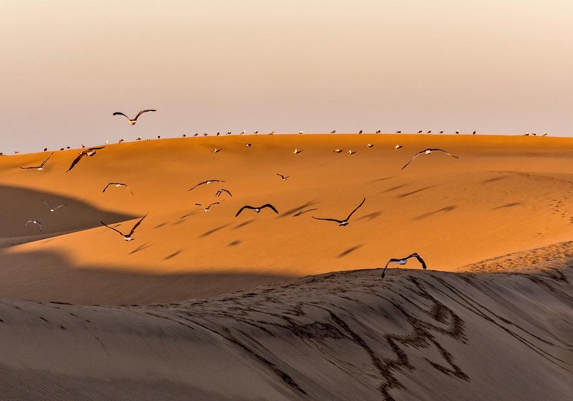 """фото """"Над песчаными волнами"""" метки: природа, дюны, утро, чайки"""