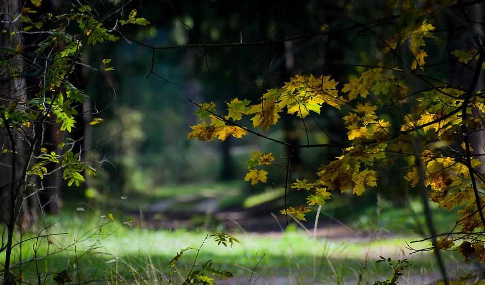 """фото """"Наступление осени"""" метки: природа, лес, осень"""